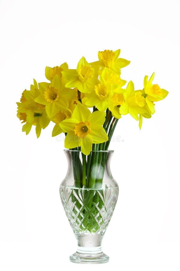 daffodils royalty-vrije stock afbeelding