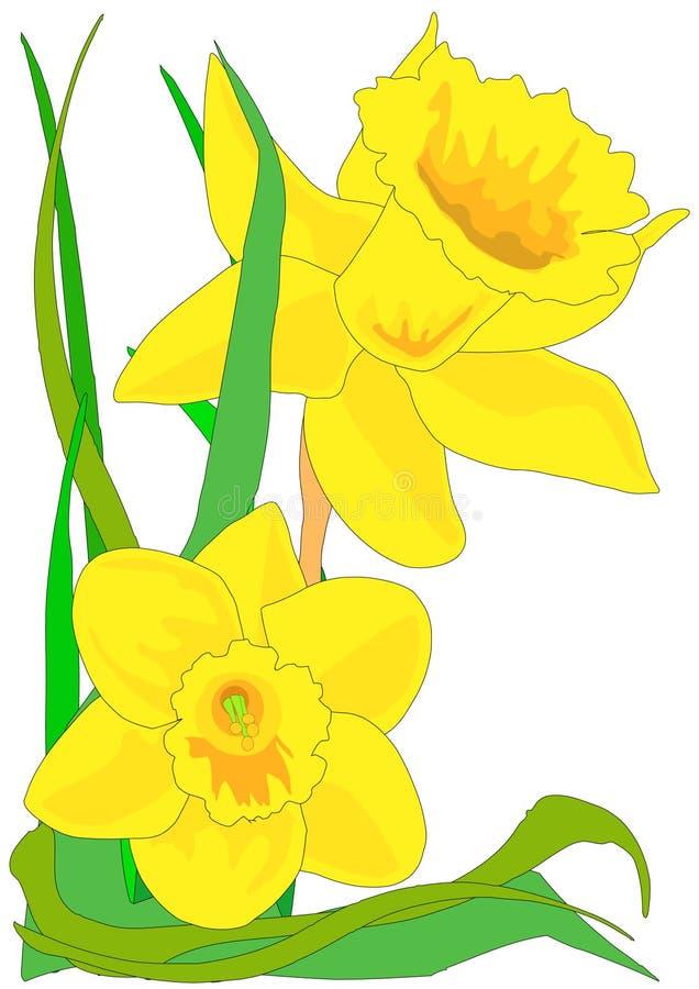 daffodils иллюстрация штока
