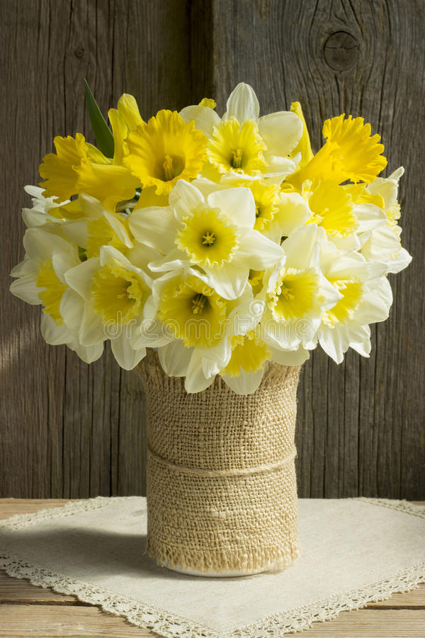 daffodils stock afbeelding