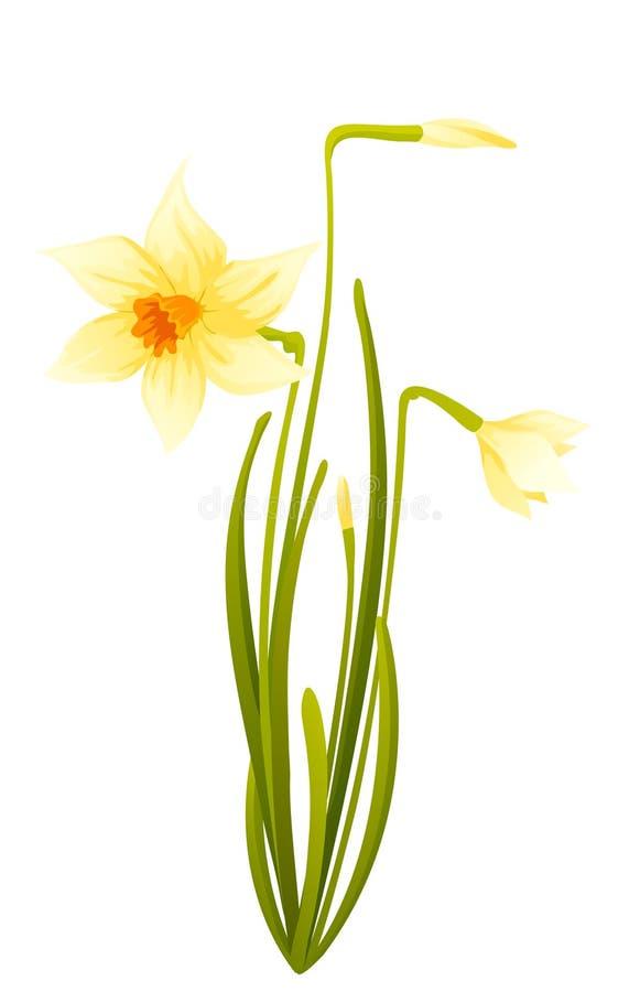 Daffodils ilustração do vetor