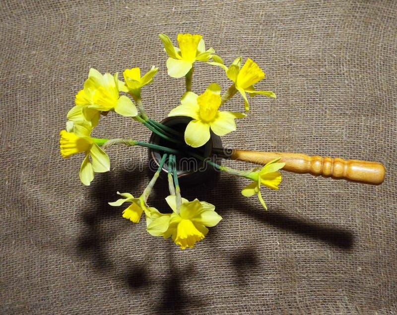 daffodils royalty-vrije stock foto's