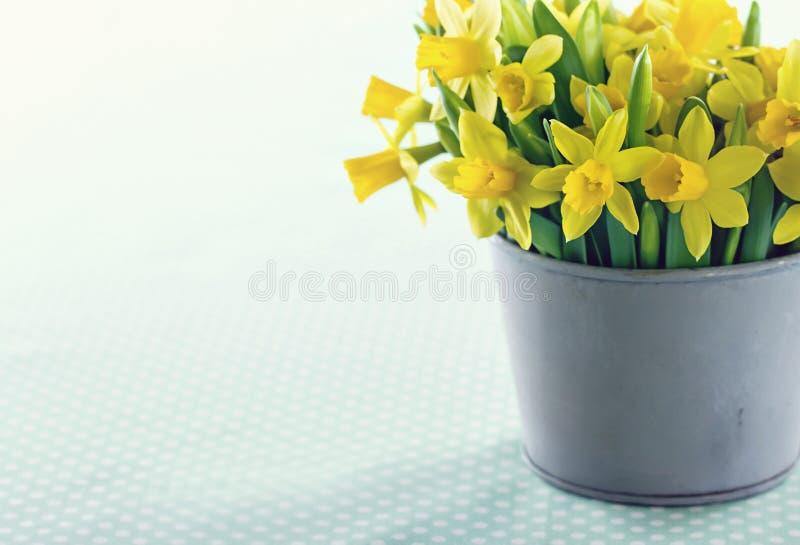 Daffodils amarelos da mola fotos de stock