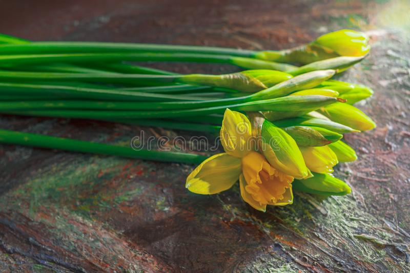 Daffodils on colored canvas in sunlight. Close up royalty free stock images