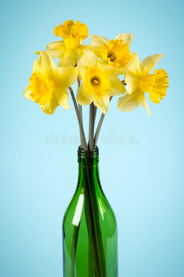 Daffodils in green bottle royalty free stock photo