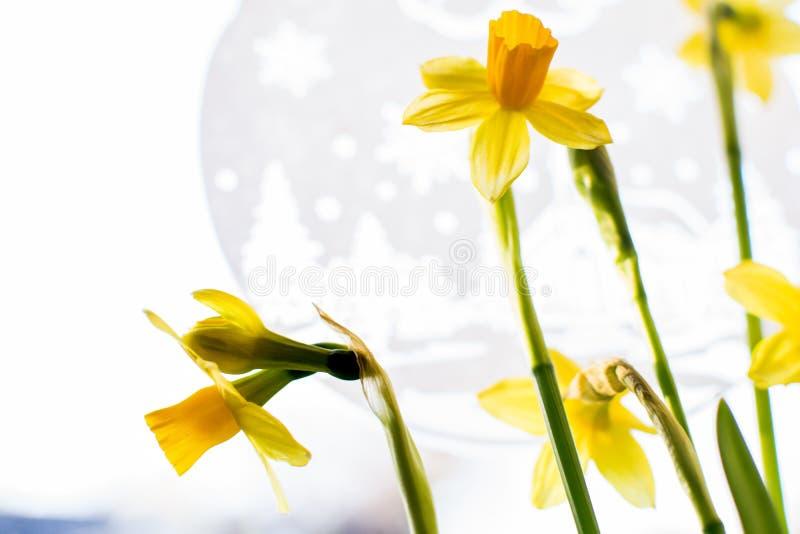 Daffodils kwitnąć obrazy stock