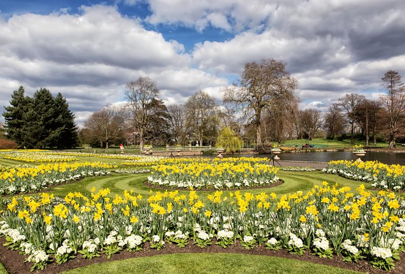Download Daffodils And Marguerites In The Park Stock Image - Image of green, grass: 39506193