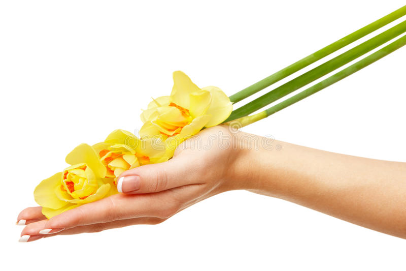 Download Daffodils ręka zdjęcie stock. Obraz złożonej z piękny - 13333516