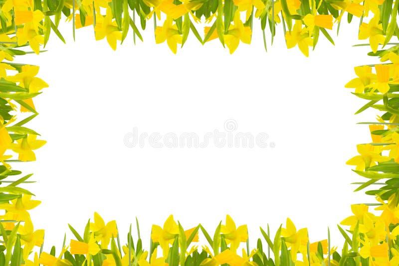 Daffodils rama royalty ilustracja