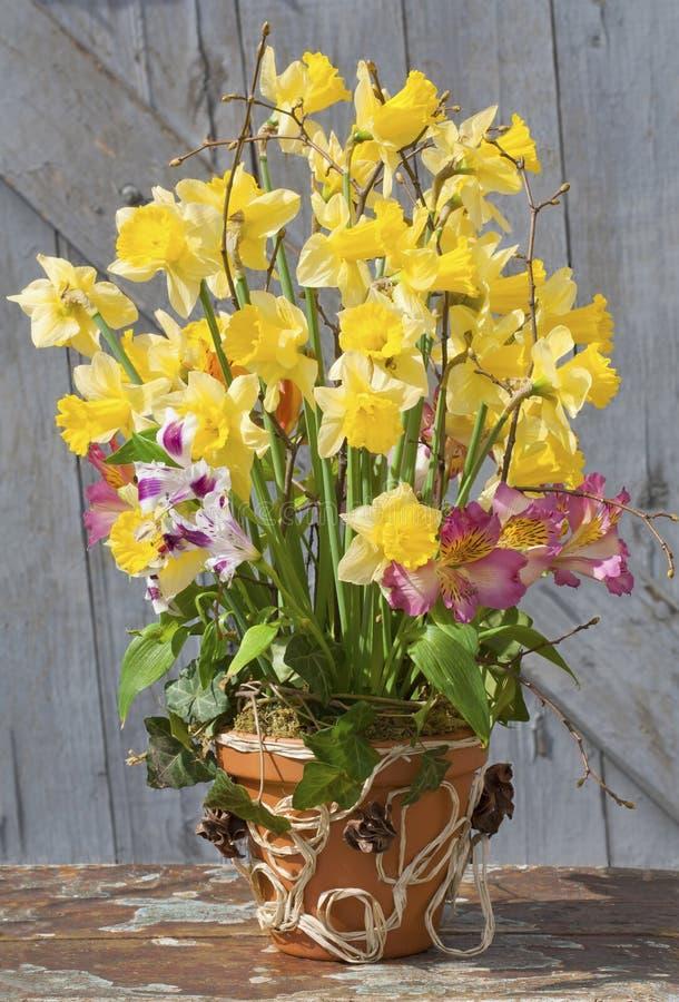 Daffodils in un POT di ceramica fotografia stock