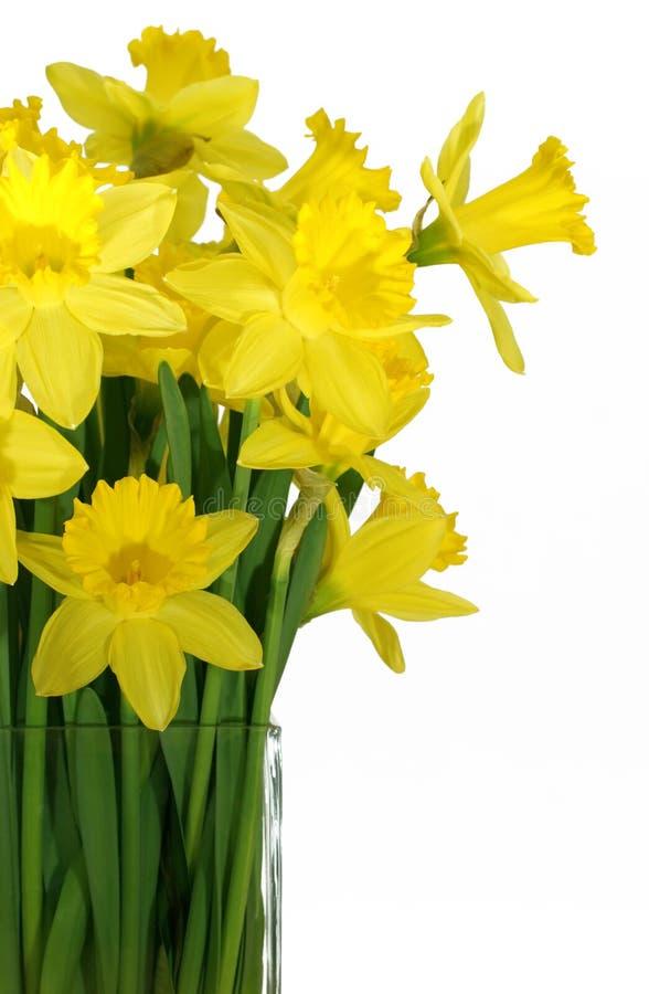 Daffodils in un vaso di vetro quadrato immagine stock