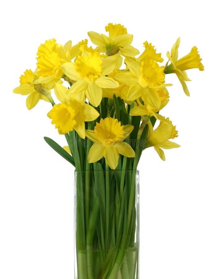 Daffodils in un vaso - isolato fotografia stock