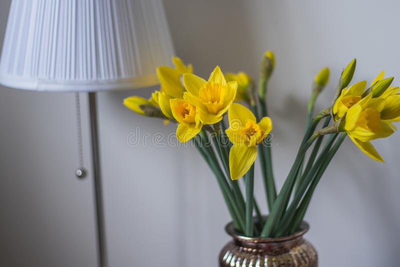 Daffodils in a vase in home royalty free stock photography