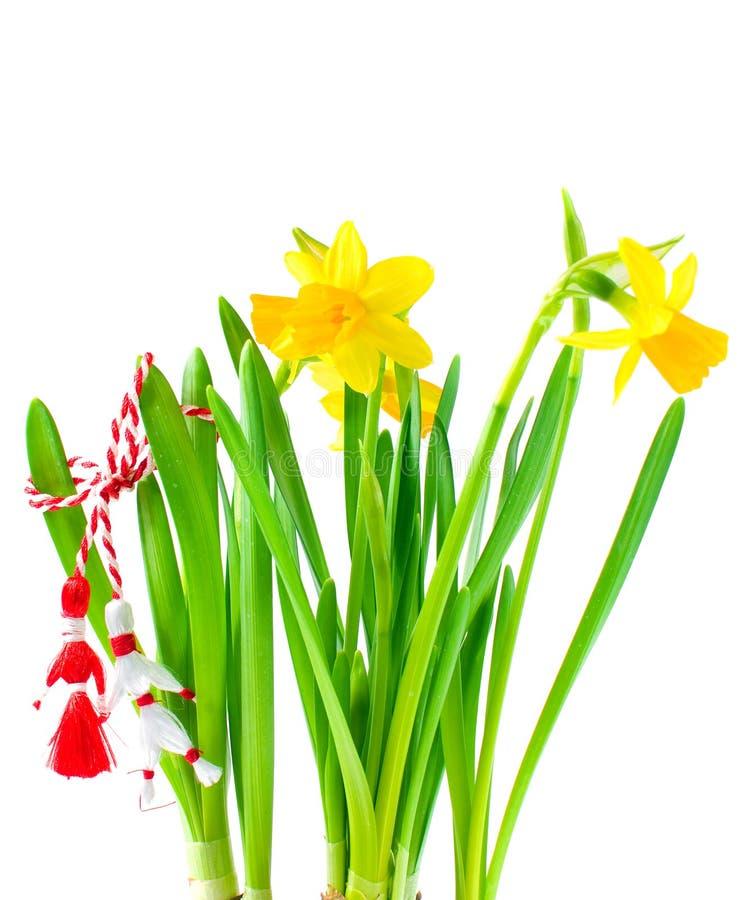 daffodils wakacyjna martisor wiosna zdjęcia royalty free