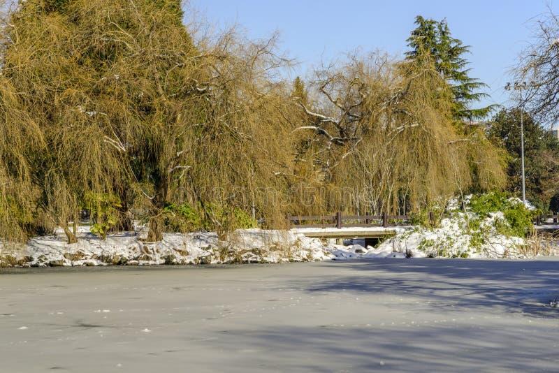 Dag in een snow-covered park met groene bomen en struiken, ijzig meer stock afbeelding