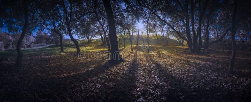 Dag en nacht in een diep de herfstbos royalty-vrije stock fotografie