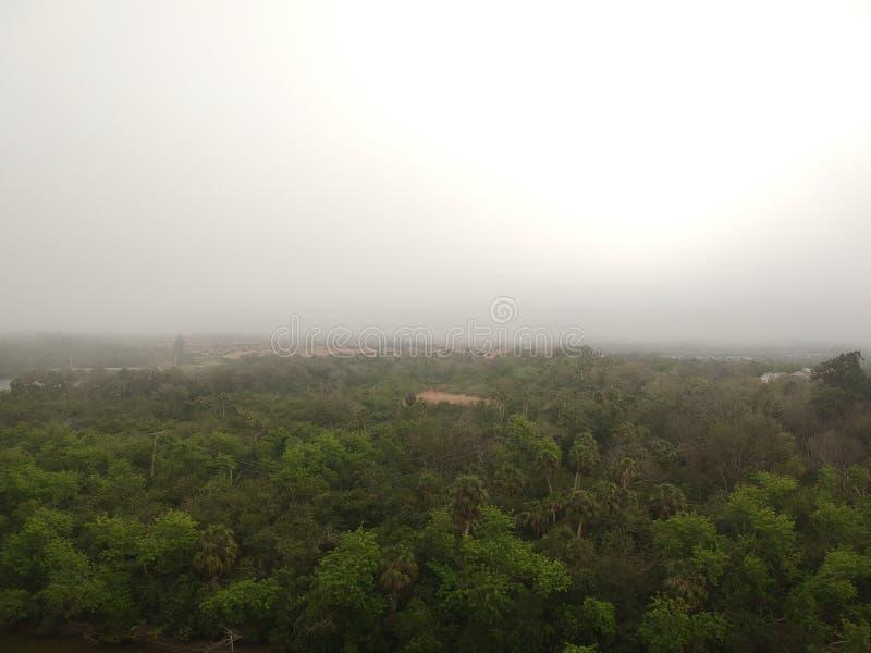 Dag nära skogen arkivbild