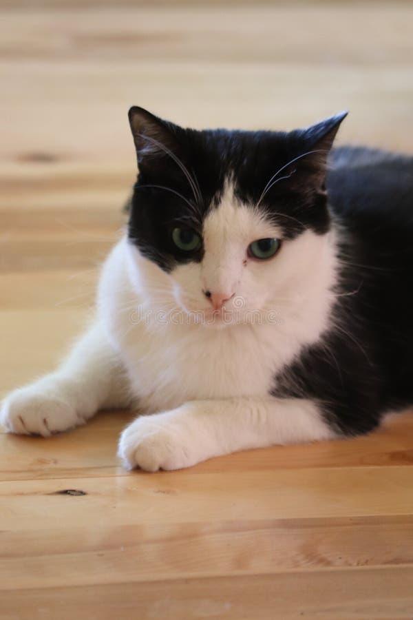 Dag som drömmer den svartvita katten arkivbilder