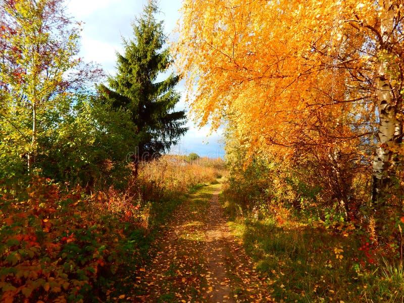 Dag van de herfst royalty-vrije stock afbeeldingen