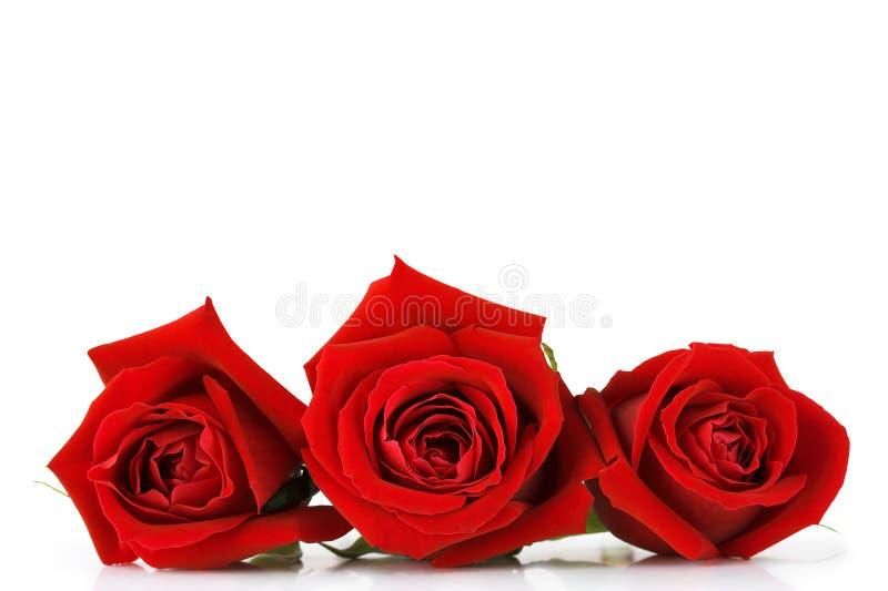 Dag van valentijnskaarten nam toe royalty-vrije stock afbeeldingen