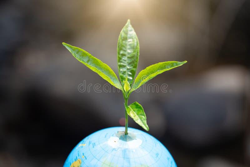 Dagen för världsmiljö unga gröna träd som växer på jordklotet med droppe över gräsplan- och morgonsolljusmiljö arkivfoton