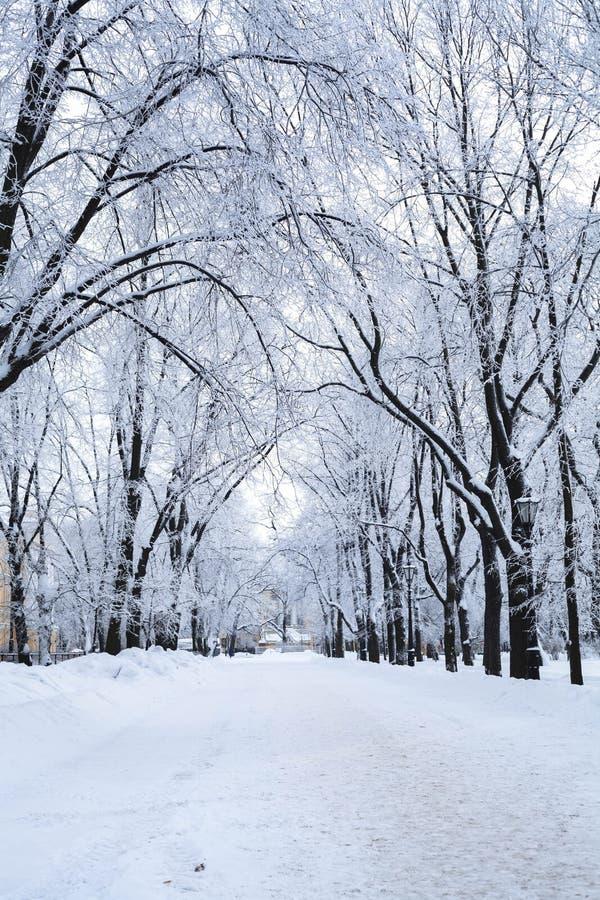 Dagen i en tom vinter parkerar efter ett snöfall Trädfilialer täckas med rimfrost och ny fluffig snö royaltyfri bild