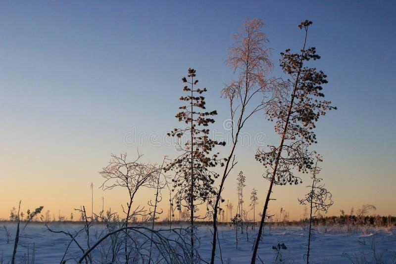 Dageraad van mooie koude de winterdag in het platteland royalty-vrije stock foto