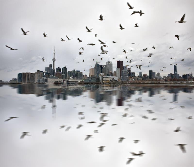 Dagfoto av Toronto Ontario arkivfoton