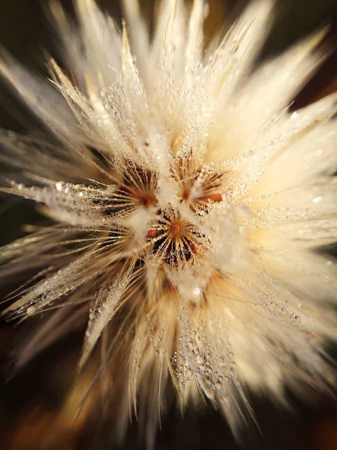 Dagg på blomman arkivbilder