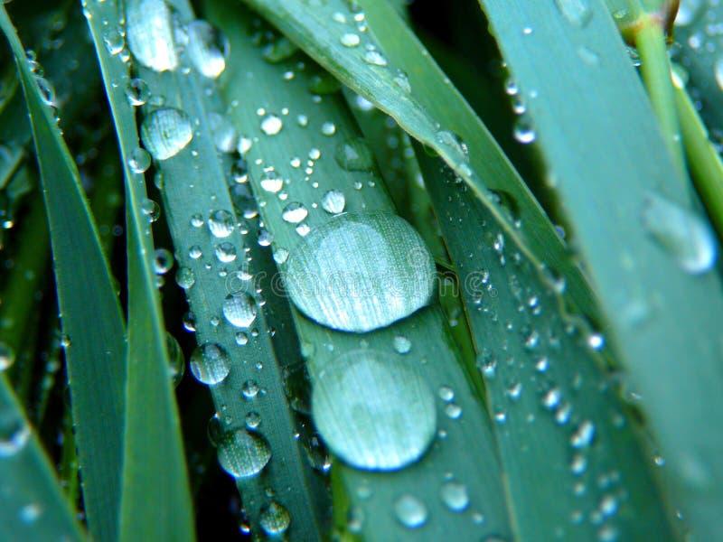 Dagg på closeupen för grönt gräs arkivbild