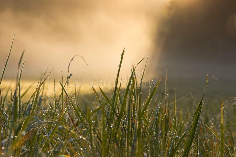 Dagg på gräset med dimma royaltyfria foton