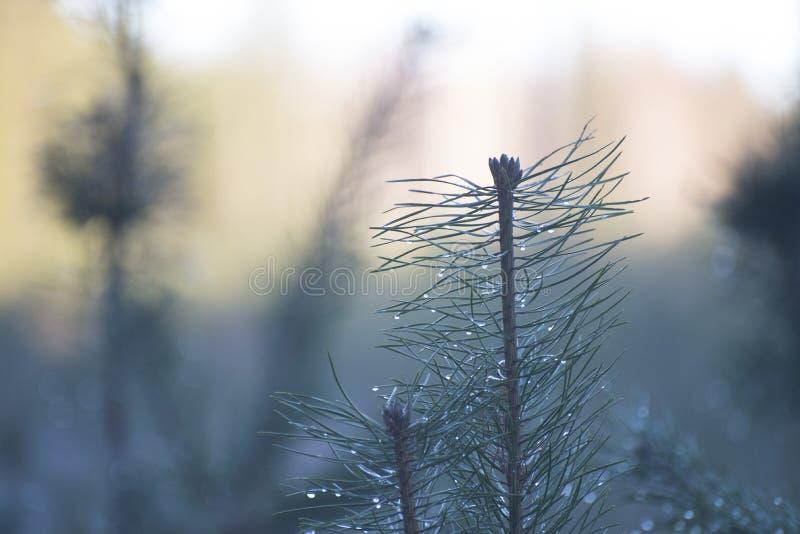 Dagg på trädfilialerna arkivbild