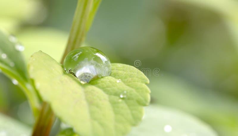 dagg tappar den gröna leafen royaltyfria foton