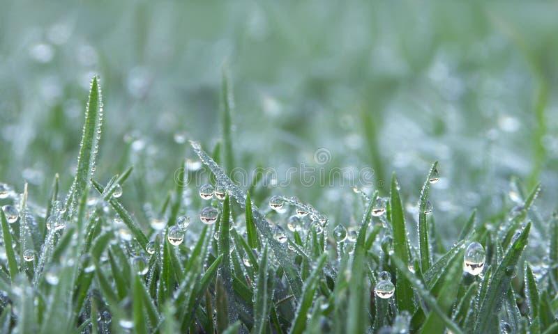 Dagg tappar på grönt gräs arkivbilder