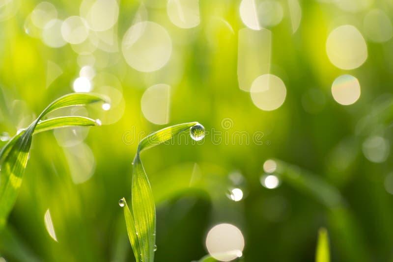 Daggdroppar på det gröna gräset Makro arkivfoto
