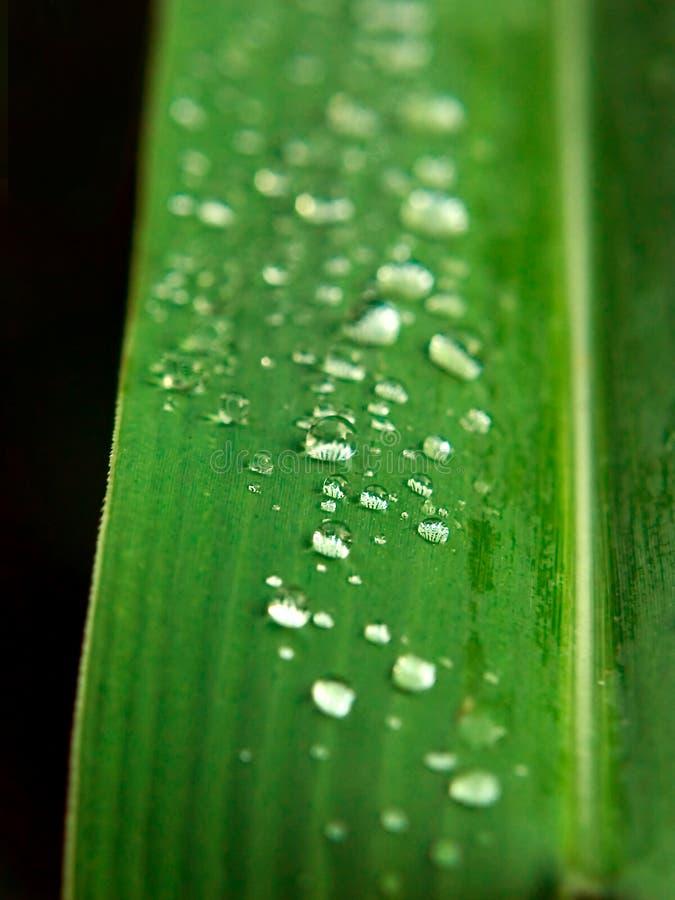 daggleafvatten fotografering för bildbyråer