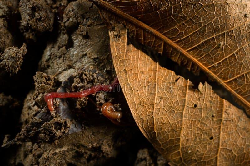 Daggmaskar i jord med torra sidor royaltyfri bild