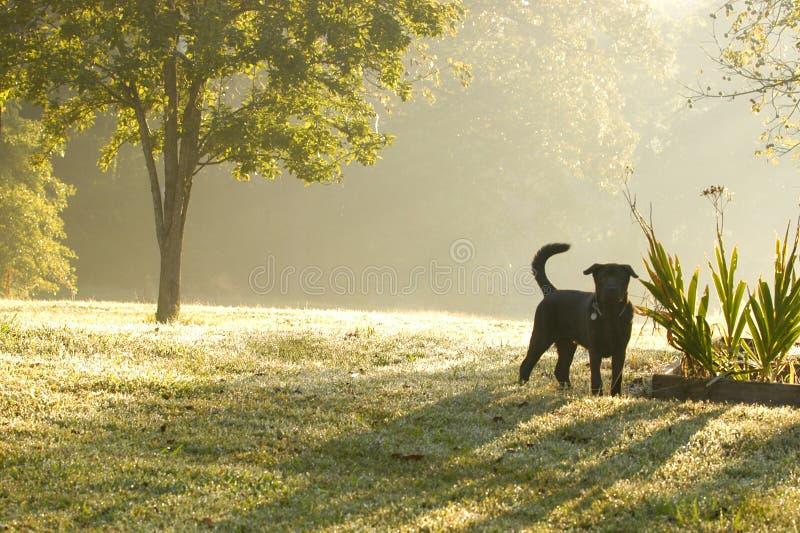 Download Daggmorgon arkivfoto. Bild av härlig, grönska, skugga, green - 276202