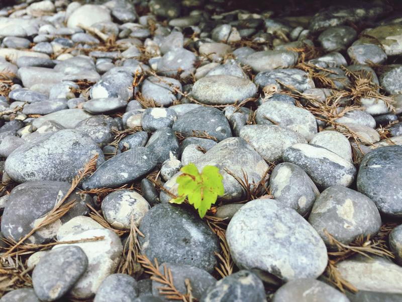 Daggräsplan vaggar naturliv arkivbilder