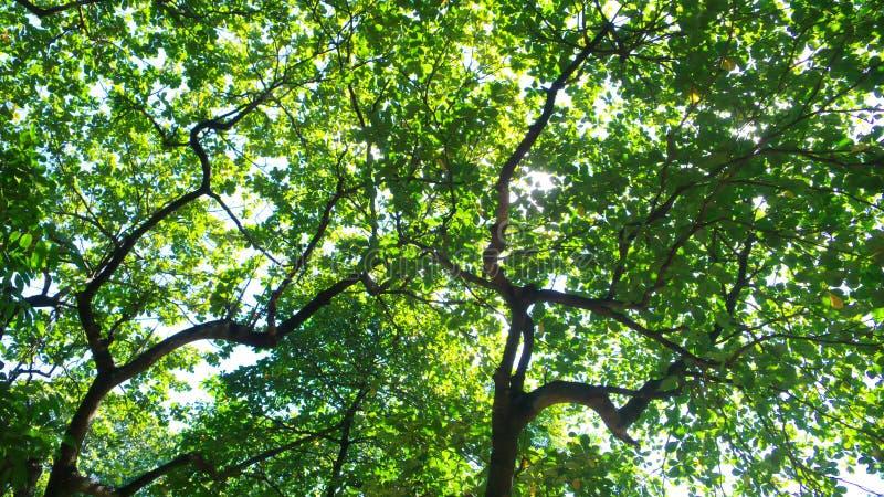 daggreen låter vara soligt arkivbilder
