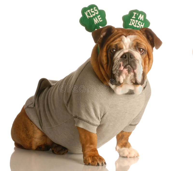 daghundpatrick s st royaltyfri fotografi