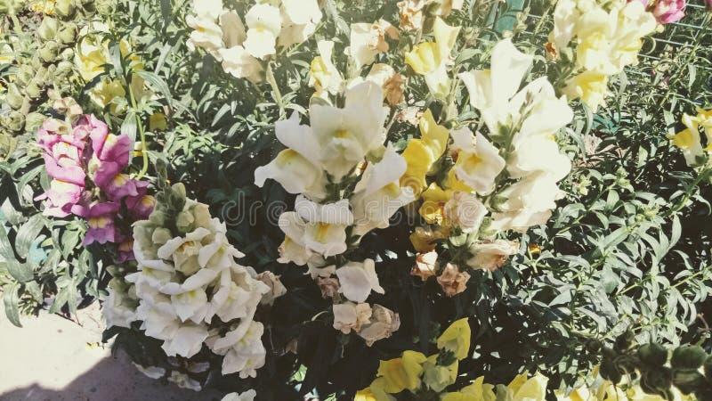 Daglicht van bloemen het verschillende trillende colourfull stock afbeeldingen