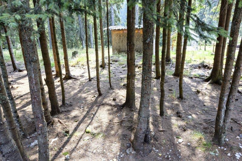 Daglichtmening aan groene bomen met schaduwen royalty-vrije stock foto