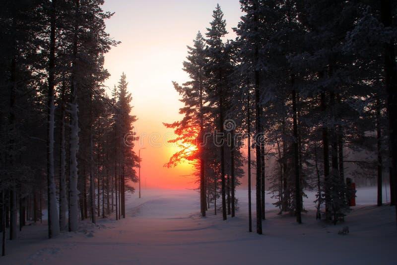 Dagsljus på den Pyhä-Luosto nationalparken Lapland royaltyfri bild