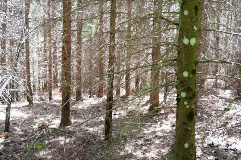 Dagsljus som filtrerar genom hela träden arkivbild
