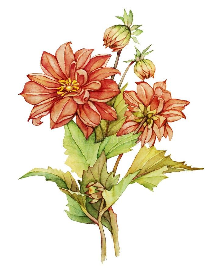 Dahlia illustration de vecteur
