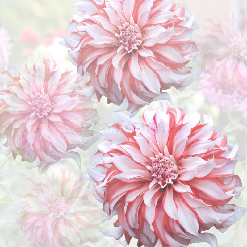Dahlia. On a background of late summer garden flowers stock illustration