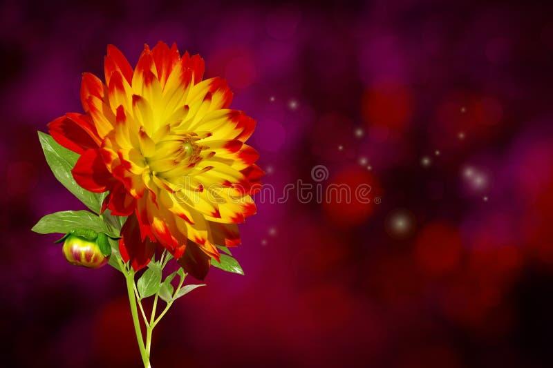 Dahlia Autumn Flower foto de archivo