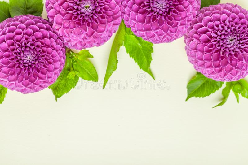 Dahlia ball-barbarry border frame - top view on violet fresh flowers with green leaves and buds. stock image