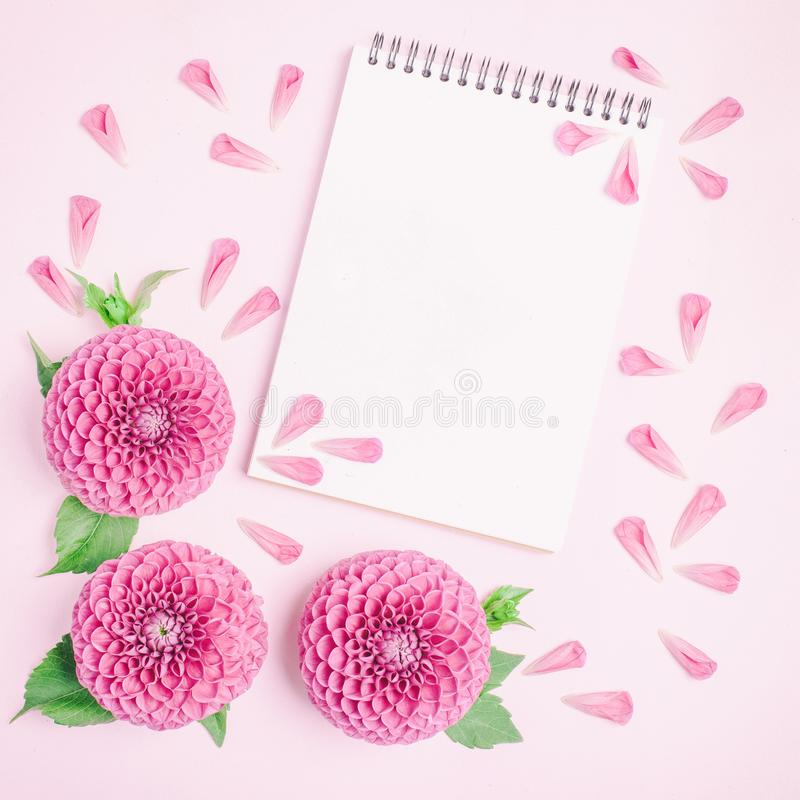 Dahlia ball-barbarry flowers and petals with green leaves and buds. Dahlia ball-barbarry flowers and petals with green leaves and buds - top view on pink royalty free stock photography
