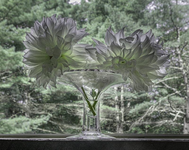 Dahlia bloemen in de vaas royalty-vrije stock fotografie